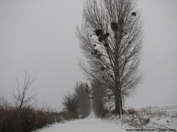Macin01 - Drumul Luncavita-Nifon