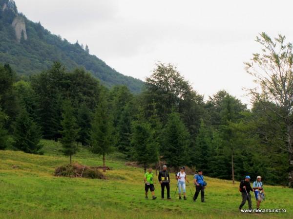 Ultimii paşi până la drumul forestier din Pasul Boncuţa; în stânga unul dintre Colţii Boncuţei