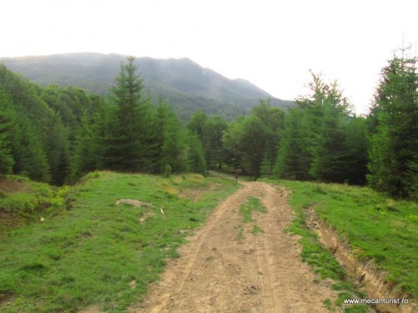Plaiul Boncuţa. În plan îndepărtat – Culmea Văii Stânii, pe care abia dacă se disting Colţii Boncuţei. În dreapta, lângă pădurea de conifere, panta reliefului coboară către Pârâul Fetii, unul dintre cei trei afluenţi de obârşie ai Buzăului.