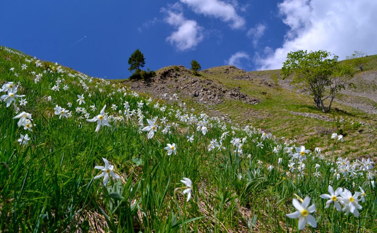 068 Dan Popa - Mai - Munții Baiului - Poiana cu narcise de pe Valea Rea