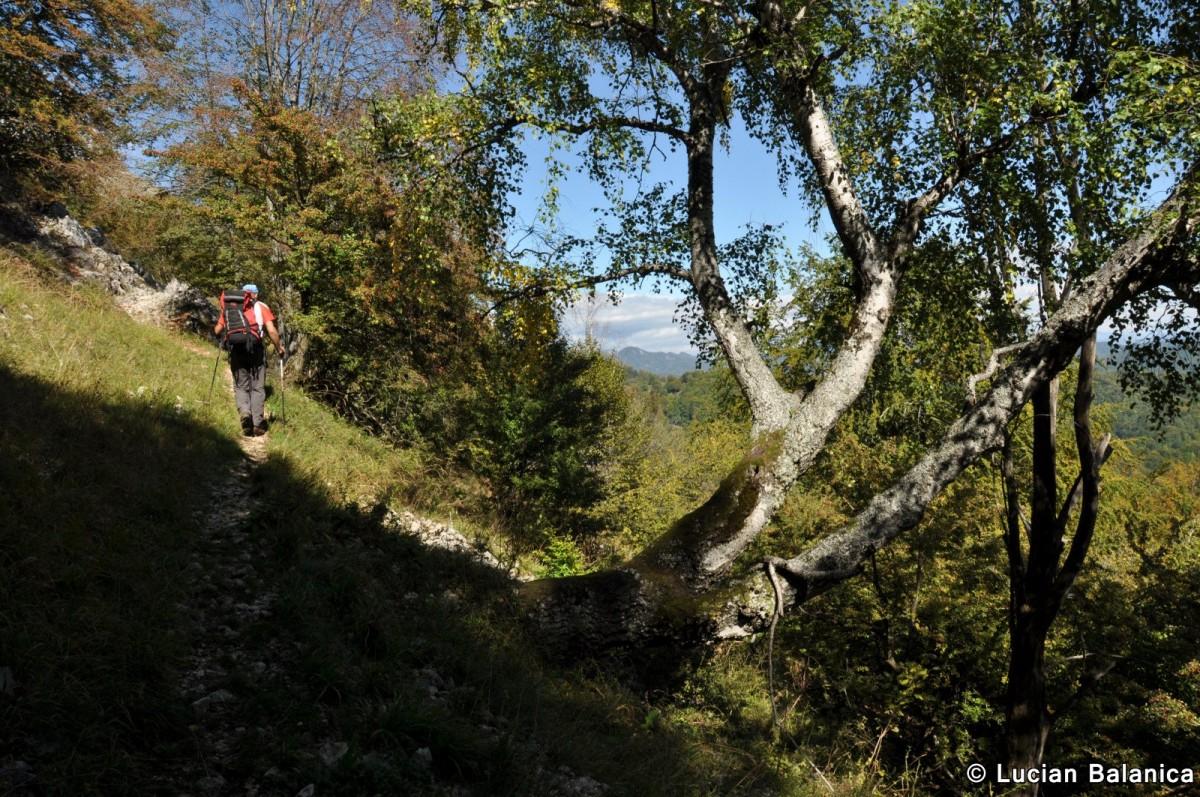 037 Muntele Cacova, Masivul Buila-Vanturarita