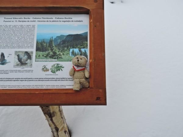 24.In Ceahlau sunt ursuleti