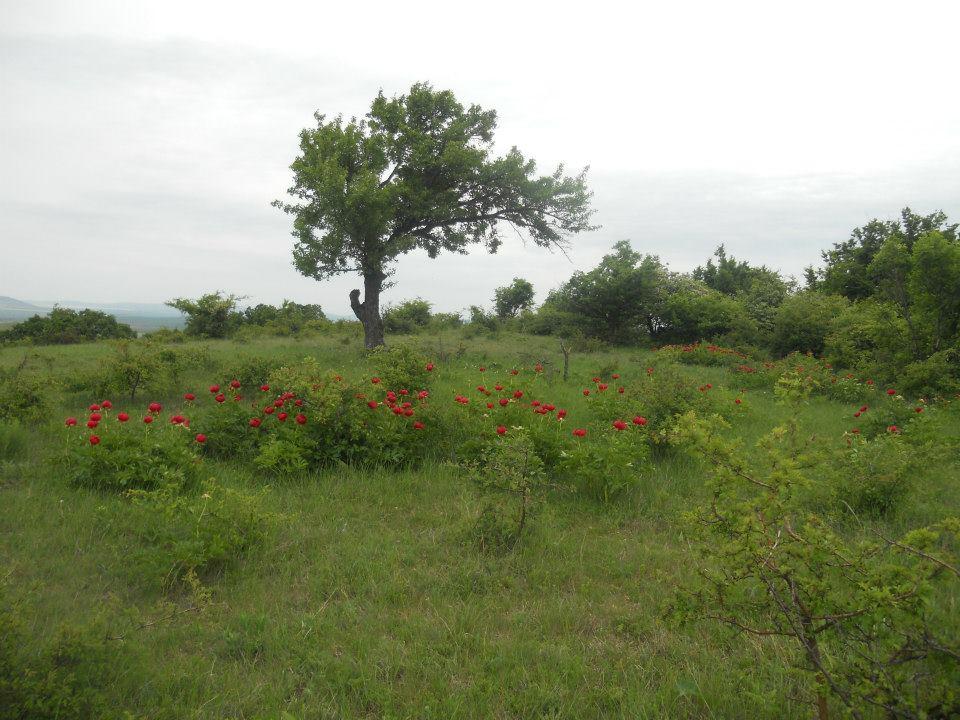 09. Un copac cu flori