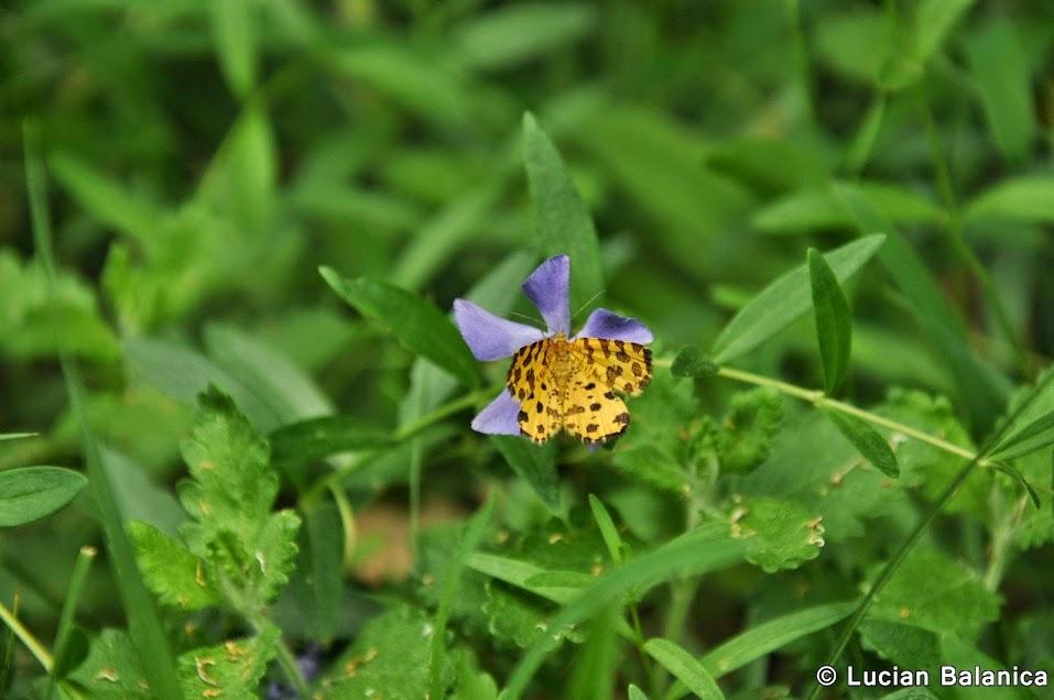 12. Butterfly 3
