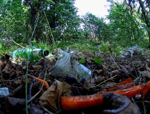 Ecologizare Padurea Garboavele